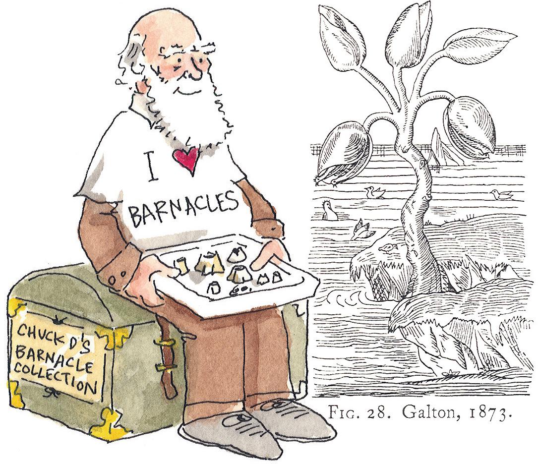 Barnacle Darwin