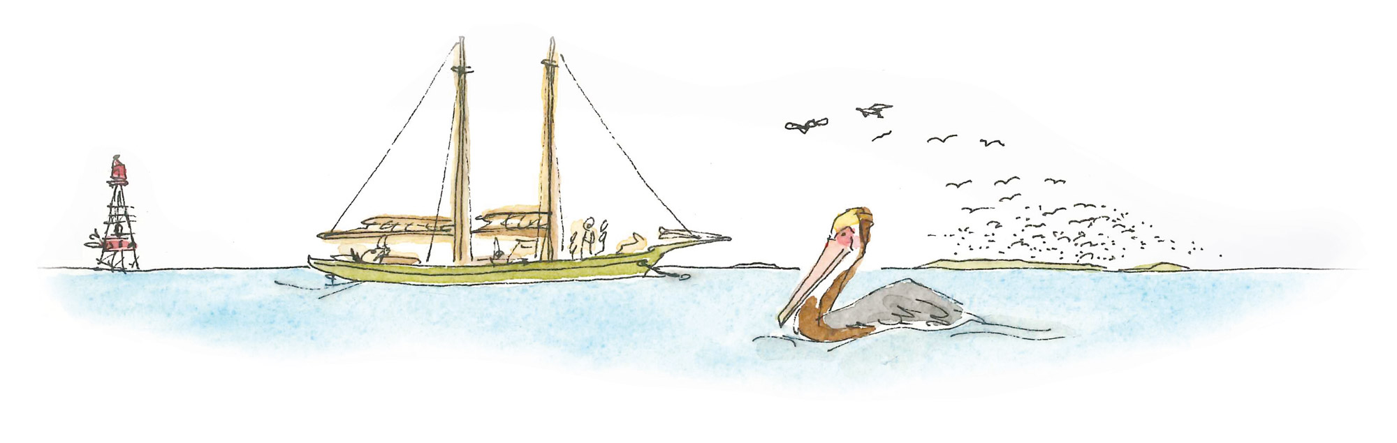 Brown Pelican Cartoon Island