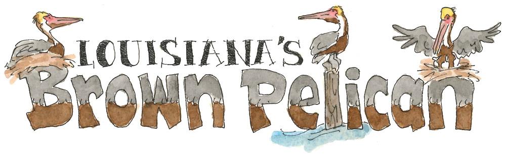 Brown Pelican Words