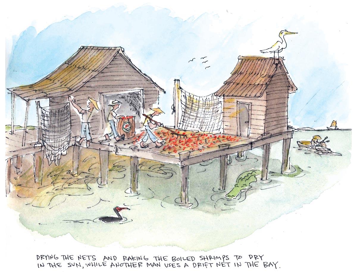 Dried Shrimp Scene Cartoon