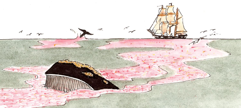Krill Scene
