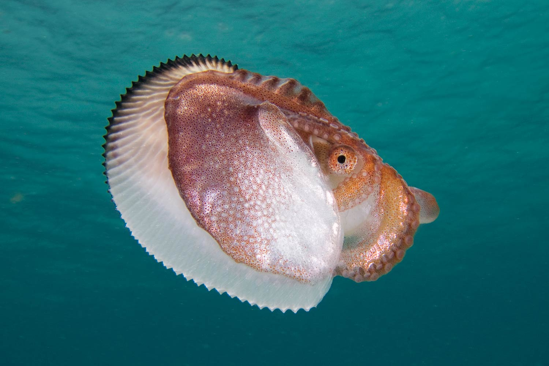 Nautilus Minden