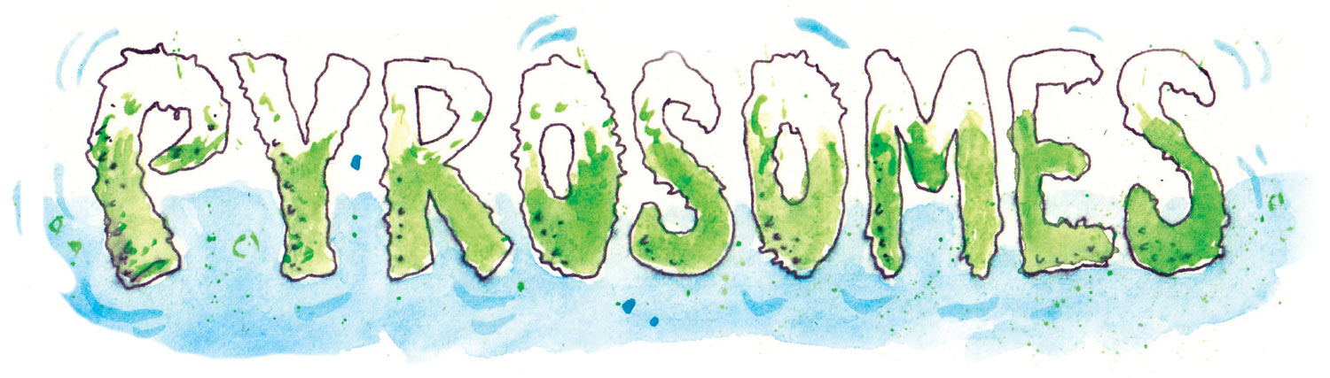 Hand drawn letters for Pyrosomes