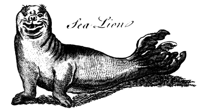 Sea Lion by Brookes in 1766