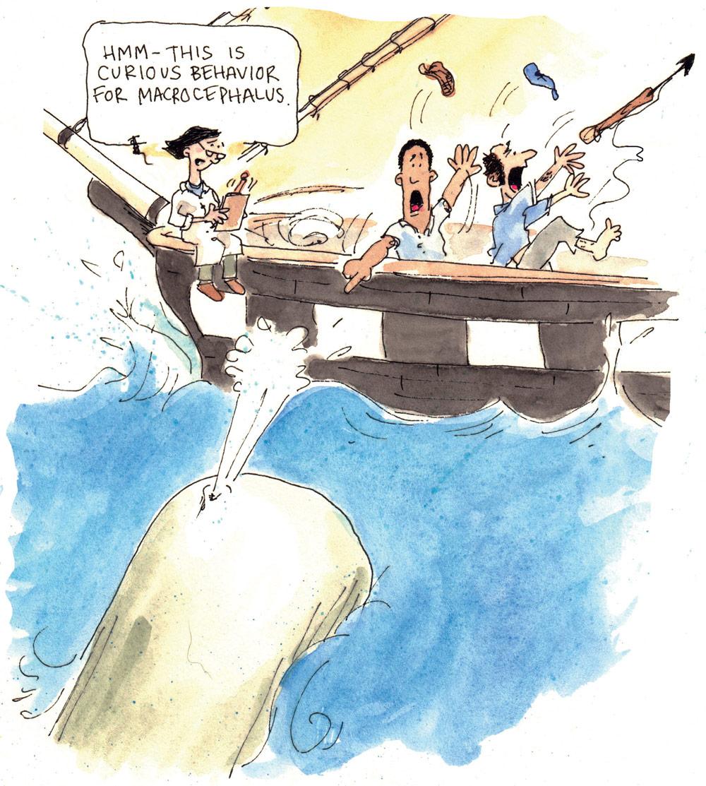 Sperm whale and sinking ship Cartoon