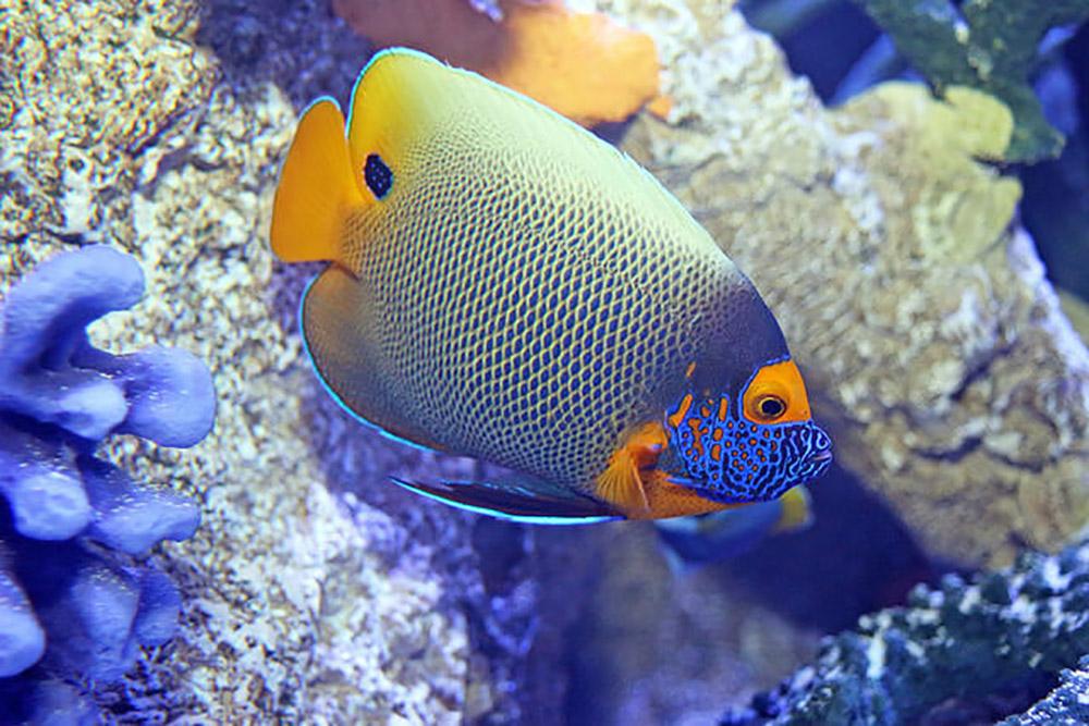 The Maritime Aquarium At Norwalk Fish