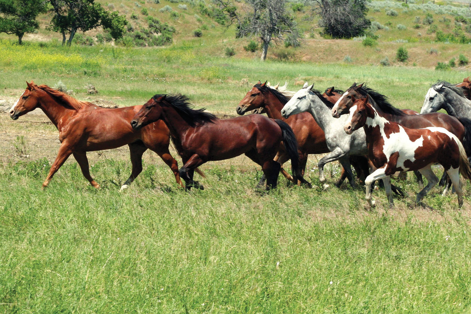 a pack of multi-colored horses