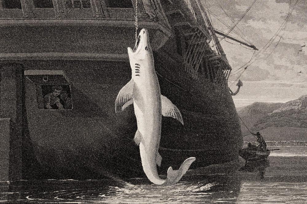 William Daniel - Shark Etching