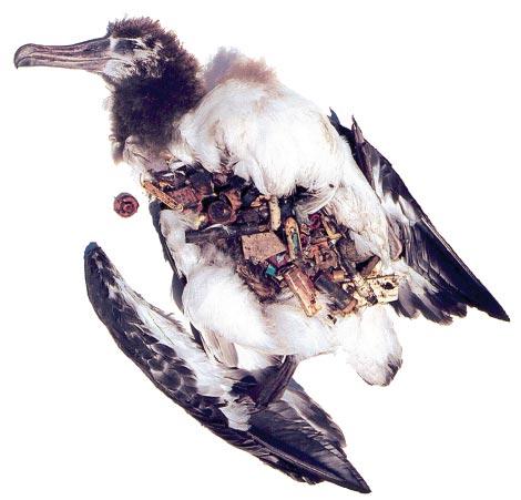 Albatross Plastic NOAA