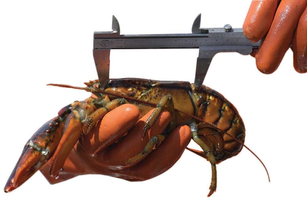 Lobster Measure