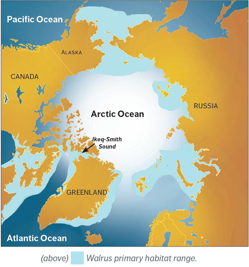 map of walrus habitat range